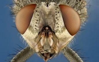 Nikon Small World : les plus belles photos et vidéos de microscope