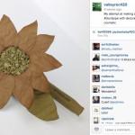 joints-artistiques-best-blunts-nature-fleur16