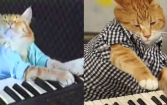 Keyboard Cat : le chat star qui joue du piano est de retour !