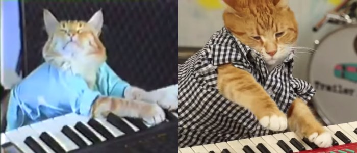 keyboard cat le chat qui joue du piano