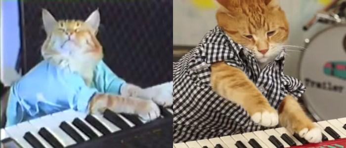 keyboard cat le chat qui joue du piano