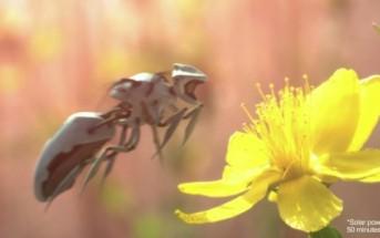 Greenpeace dévoile 2 superbes vidéos pour sauver les abeilles