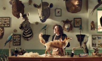 pub granola taxidermiste des animaux empaillés chantent