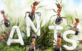 La vie fantastique des fourmis en photo par Andrey Pavlov