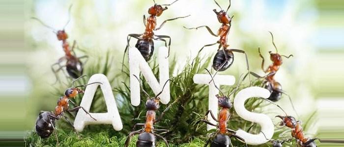 ant tales : la vie fantastique des fourmis en photo