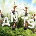 photos-vie-fantastique-fourmis-ant-tales-00