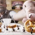 photos-vie-fantastique-fourmis-ant-tales-01
