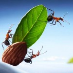 photos-vie-fantastique-fourmis-ant-tales-02