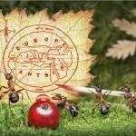 photos-vie-fantastique-fourmis-ant-tales-03