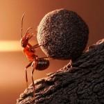 photos-vie-fantastique-fourmis-ant-tales-04