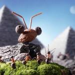photos-vie-fantastique-fourmis-ant-tales-05