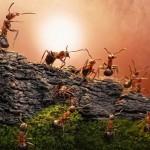 photos-vie-fantastique-fourmis-ant-tales-06