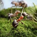 photos-vie-fantastique-fourmis-ant-tales-07