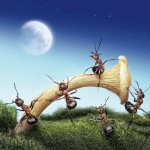 photos-vie-fantastique-fourmis-ant-tales-09