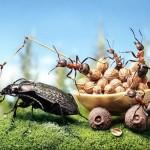 photos-vie-fantastique-fourmis-ant-tales-11