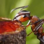 photos-vie-fantastique-fourmis-ant-tales-13