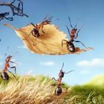 photos-vie-fantastique-fourmis-ant-tales-14