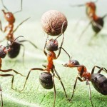 photos-vie-fantastique-fourmis-ant-tales-15