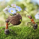 photos-vie-fantastique-fourmis-ant-tales-17