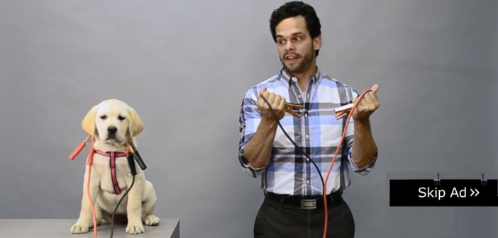 la pub pre-roll youtube avec un chiot électrocuté