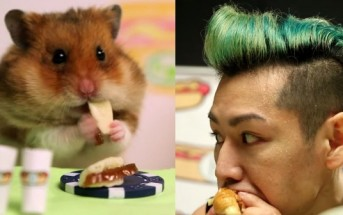 Un hamster défie un champion de mangeage de hot dogs