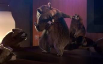 Des ratons-laveurs dansent le twerk pour Schneider Electric