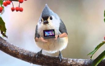 Les oiseaux ont des bras dans cette pub WTF pour Asus