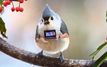 l'oiseau avec des bras de la pub acer