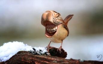 Des oiseaux effrayants avec une bouche et des dents
