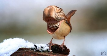 big-mouth-birds-oiseau-bouche-dents-sarah-deremer-01