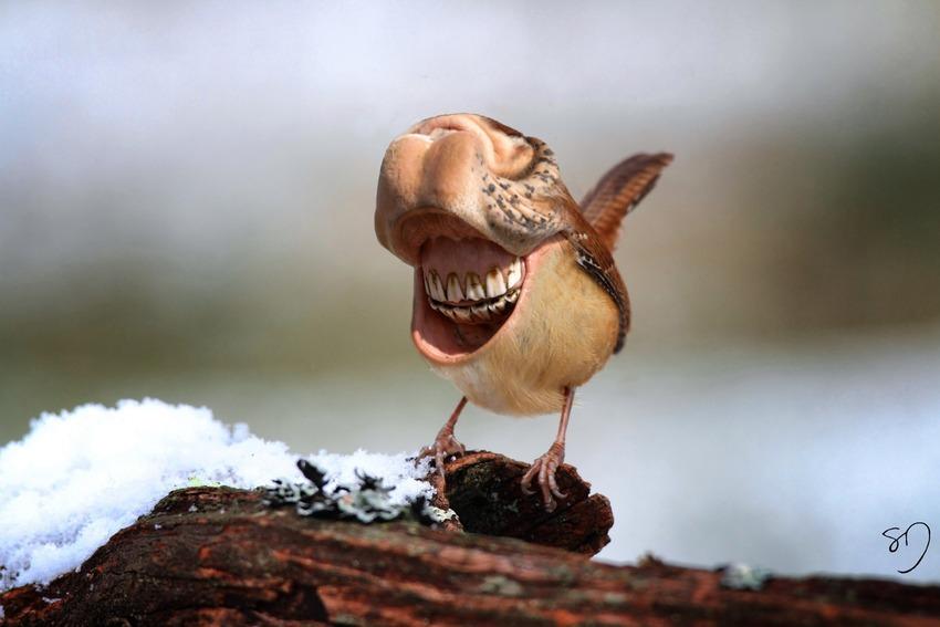 big-mouth-birds-oiseau-bouche-dents-sarah-deremer-01