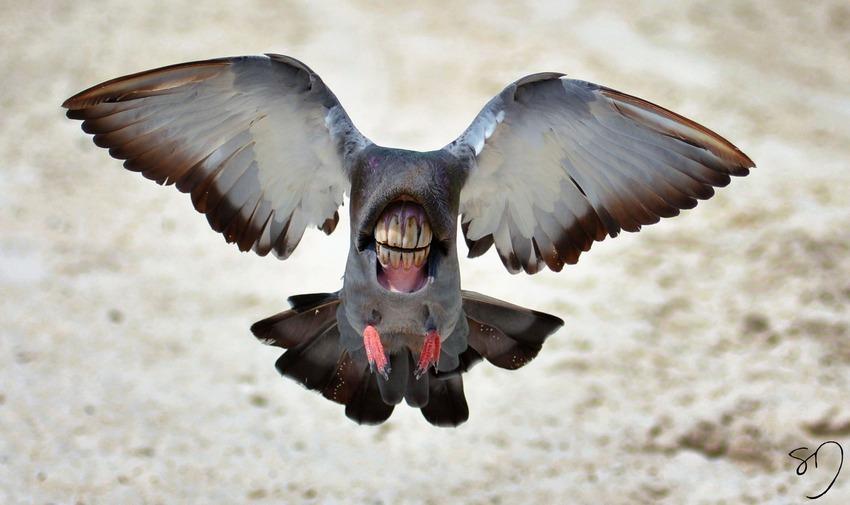 big-mouth-birds-oiseau-bouche-dents-sarah-deremer-03