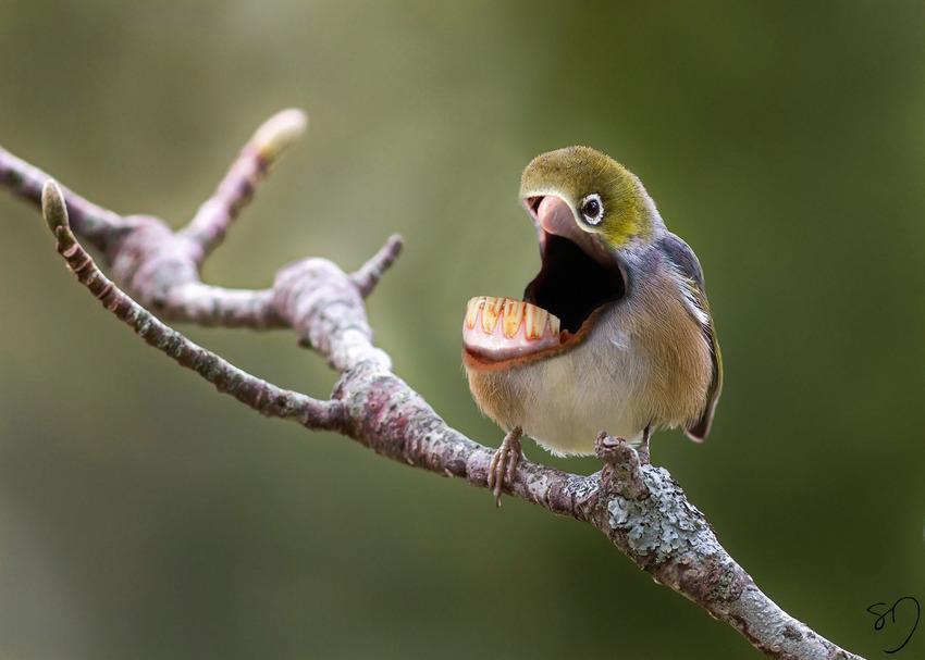big-mouth-birds-oiseau-bouche-dents-sarah-deremer-07
