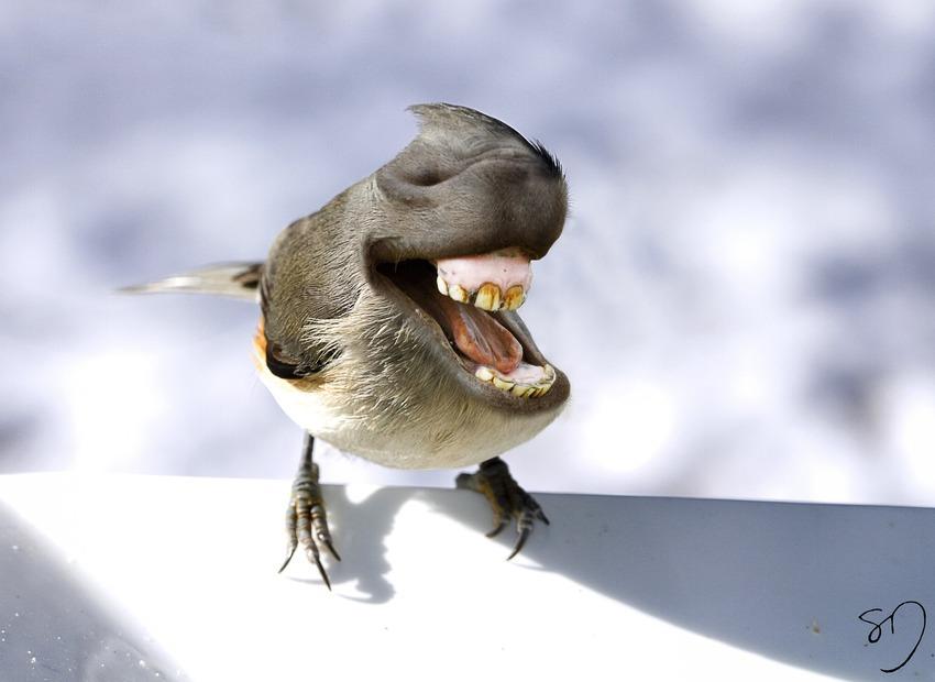big-mouth-birds-oiseau-bouche-dents-sarah-deremer-08