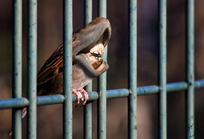 big-mouth-birds-oiseau-bouche-dents-sarah-deremer-10