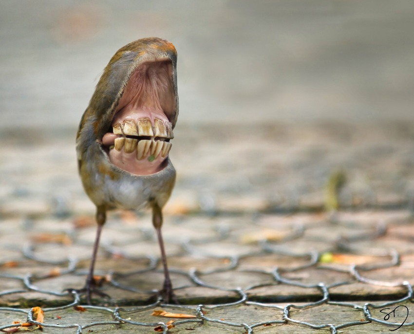 big-mouth-birds-oiseau-bouche-dents-sarah-deremer-11