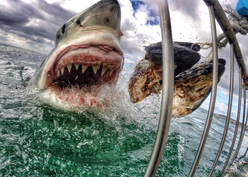 photo de requin blanc gopro