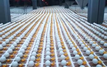 Réaction en chaîne : pièges à souris et balles de ping pong