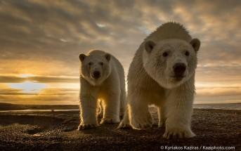 Les 10 plus belles photos d'animaux de 2014 sur 500px