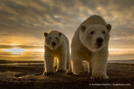 Curious Bear by Kyriakos Kaziras on 500px