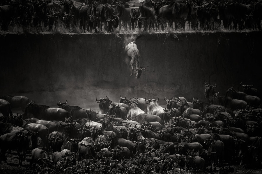 The great migration by Nicole Cambré on 500px