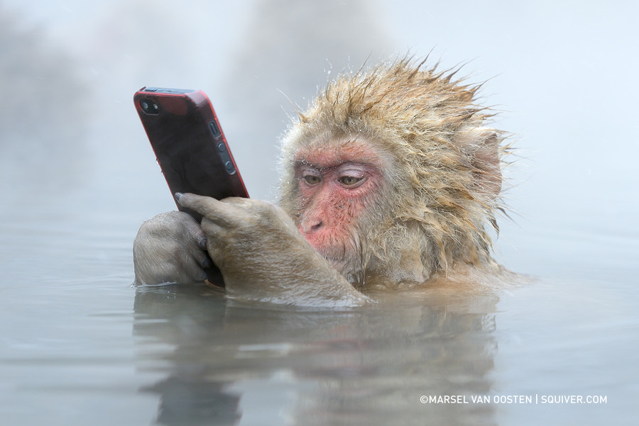 Facebook Update by Marsel van Oosten on 500px