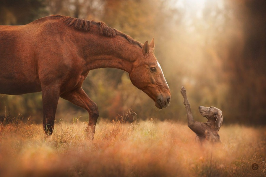hey, friend. by Hannah Meinhardt on 500px