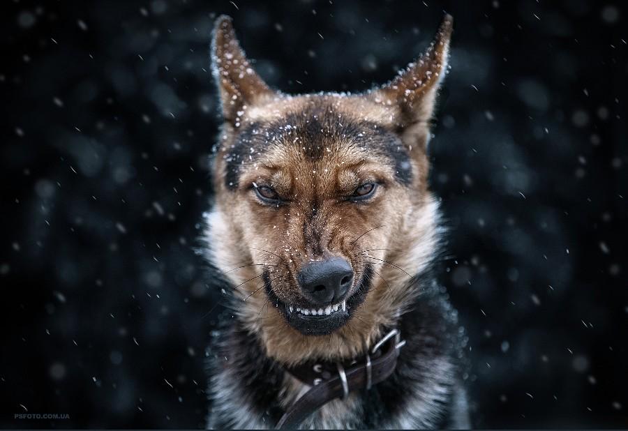 Come on, I do not bite by Sergey Polyushko on 500px