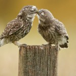little kiss by Mark Bridger on 500px
