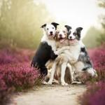 Friends by Alicja Zmyslowska on 500px