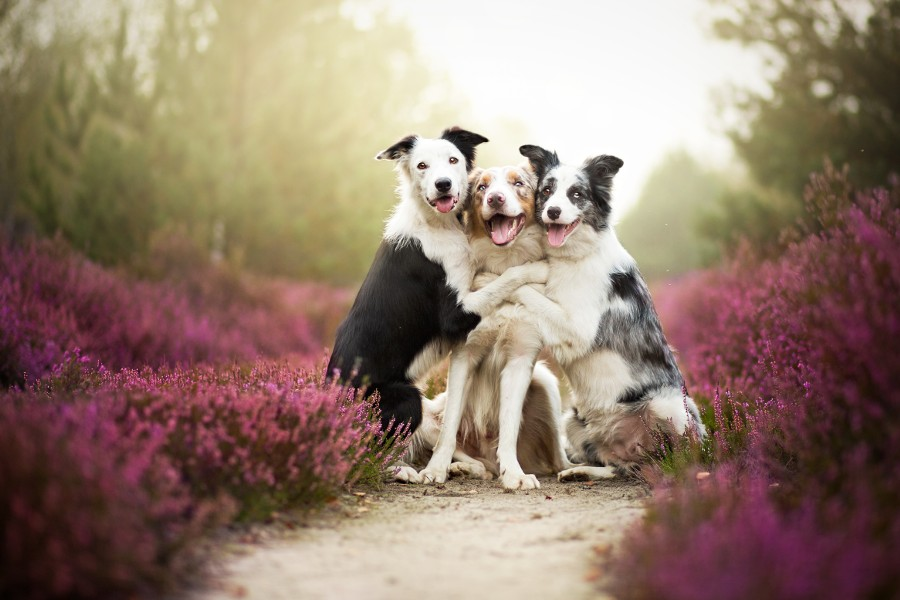 Friends by Alicja Zmyslowska on 500px