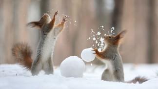 """Résultat de recherche d'images pour """"jouer dans la neige"""""""