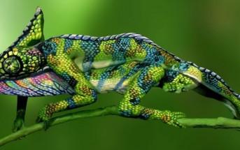 Bodypaint : ce n'est pas un caméléon mais 2 femmes nues !