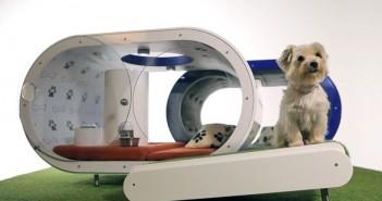 Samsung Dream Doghouse : la niche high-tech pour chien - Crufts 2015